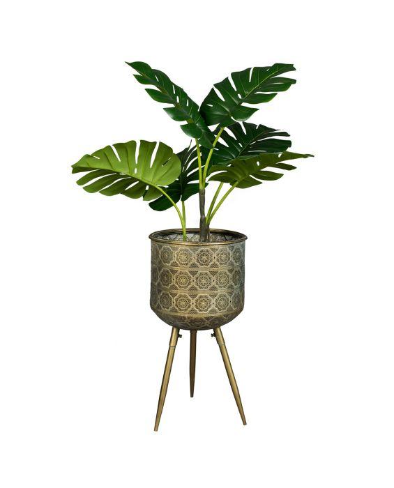 Blumentopf - Botanique L